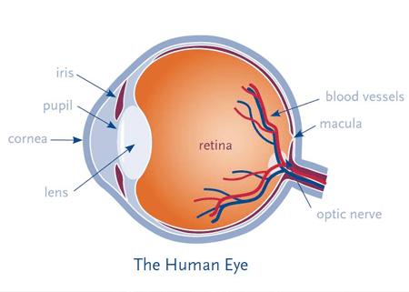 Eye Tests Enfield